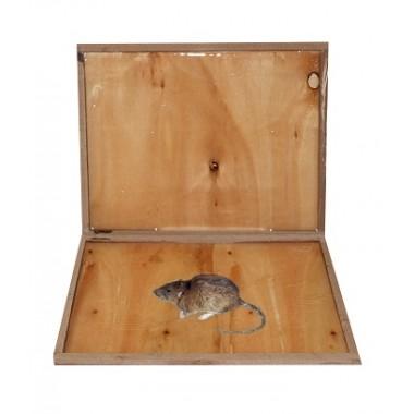 Capcana adeziva pentru combaterea rozatoarelor din lemn